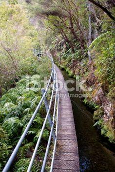 Pupu Hydro Walkway, Golden Bay, New Zealand Royalty Free Stock Photo Bay News, Walkway, Nature Photos, Simply Beautiful, New Zealand, Royalty Free Stock Photos, Photography, Image, Sidewalk