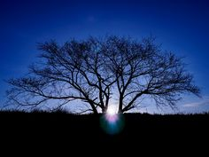 Branching Out Now Will Help You Flourish All Year Long... http://www.grandascent.com/31403/branching-out-now-will-help-you-flourish-all-year-long/