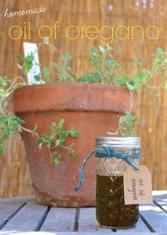 How To Make Oil Of Oregano At Home – The Perfect Autumn Project To Prep For Cold And Flu Season