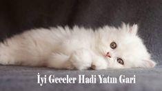 iyi geceler mesajı videolu Cats, Animals, Instagram, Gatos, Animais, Animales, Animaux, Animal, Kitty