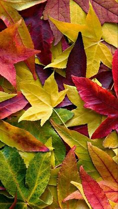Fall Colors many colored leaves Seasons Of The Year, Fall Season, Belle Photo, Autumn Leaves, Autumn Fall, Autumn Song, Deep Autumn, Autumn Garden, Beautiful World