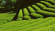 https://flic.kr/p/rbXFTJ | topiary garden | topiary garden design