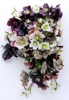 hellebores are one of my favorite flowers, not sure it is relevant but I love them! Green Flowers, Love Flowers, Wedding Flowers, Ikebana, Lenten Rose, Flower Pot Design, Rose Arrangements, Christmas Rose, Most Beautiful Flowers