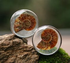 Ammonite Fossil Plugs made with resin custom by PluggingAlong, $52.00 <--- I…
