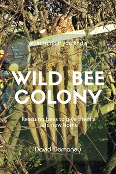 What to do if you find a wild bee colony