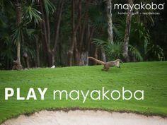 No eres el único disfrutando del campo de Golf de Mayakoba, El Camaleón esta tarde  #JUEGAmayakoba #golf