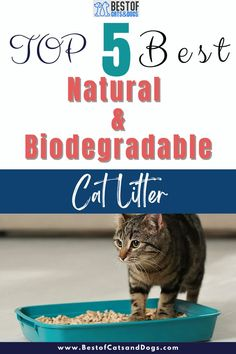 Using biodegradable Cat Litter Has Many Benefits Like Less Dust, Natural Odor Control, And Sustainability For Our Environment. Check Out Our TOP 5 Best Natural And Biodegradable Cat Litters Picks. #BiodegradableCatLitter #NaturalCatLitter #CatLitterAlternatives #EcoFriendlyCatLitter Natural Cat Litter, Cat Accessories, Cats And Kittens, Biodegradable Products, Nature, Naturaleza, Nature Illustration, Off Grid, Cats
