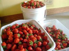 What to Do With All the Strawberries in Your Kitchen   Heavenly Homemakers