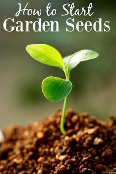 How to Start Garden Seeds Indoors - Having a garden is a fantastic way to save money on groceries, but if you're a new gardener it can be hard to get things growing. Learning how to start seeds is your first step to lush and flavorful fruits and veggies grown right in your own backyard!