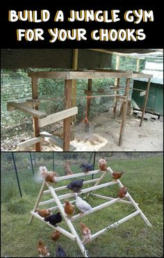 Exercise is just as important to chickens as it is to us. So if you've got backyard chickens here's one project you should do to make sure they're healthy - chicken jungle gym!