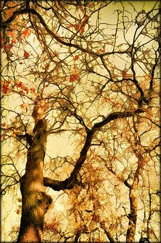 gazing up at the tremendous height and intertwining branches it struck me how much this natural living thing was like a great European Cathedral with its own version of a stained glass window. Art by Douglas MooreZart