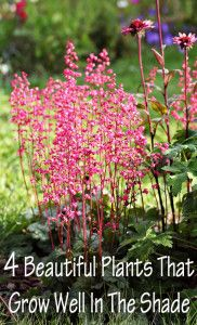 4 Beautiful plants that grow well in the shade