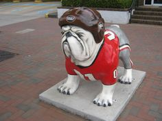 The University of Georgia's mascot!  For more information about culture check out www.livinghealthy1.org