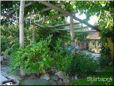 Faanyag pergola építéséhez!, egyéb otthon, kert, építkezés - Startapro.hu Pergola, Arch, Outdoor Structures, Garden, Plants, Longbow, Garten, Outdoor Pergola, Lawn And Garden