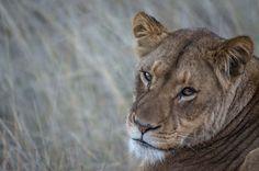 Cheetah Ridge Lodge | Specials 4 Africa