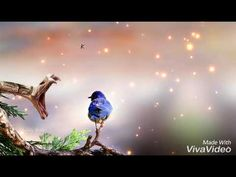 viva video free download song