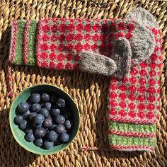 Blåbær eller tytebær. Vottelaugets votter som heter blåbærskogen. Pattern called blueberry forrest, but I changed the color and prefer cowbery forrest #vottelauget #eventyrvotter #blåbærskogen #blåbær #tytebær #gave #votter #strikk #knit #restefest2016 #mittens #gift #blueberries #cowberry #raumafinull