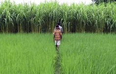 """""""Agriculture in India continues to remain the only sector that has a direct combined impact on poverty, rural livelihoods, health and nutrition. Agriculture In India, Sustainable Farming, World Economic Forum, Edible Plants, Plant Species, Fractions, Permaculture, Two By Two, Life"""