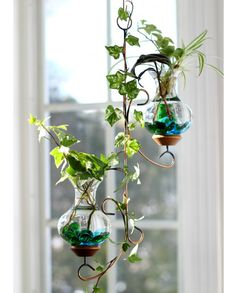Ordinaire How To Make Beautiful And Easy Hanging Low Water Gardens