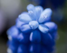 Spring flowers by Mshphoto on Etsy