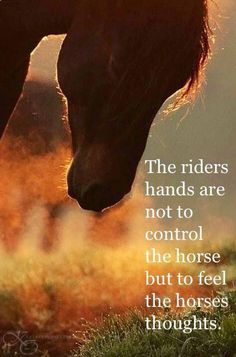 I don't like my teacher using the word control when riding, for some reason it makes me cringe...