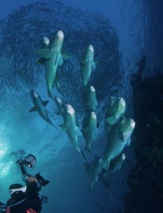 Diving guide to Bali. Scuba Dive centers, Weather, seasons, tides, conditions best time to scuba dive around the islands. Scuba diving and snorkeling tips Scuba Diving Bali, Snorkeling, Safety, Diving, Security Guard, Scuba Diving