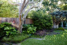 Landscape architect William Dangar replaced a derelict house in Australia with a smaller one to make more room for his family garden with a fish pond, large lawn, and specimen trees in suburban Bondi Beach. Large Backyard Landscaping, Modern Landscaping, Purple Shrubs, Garden Ideas Australia, Derelict House, Shady Tree, Specimen Trees, Lawn Edging, Family Garden