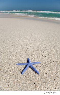 Blue starfish.