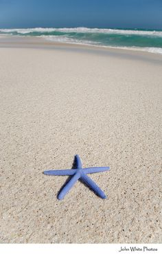 Blue starfish.