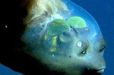 strangest animals on earth - Google Search