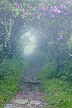 A misty morning path