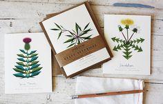 Weeds Botanical Greeting Card Set of 6 with Matching Kraft Envelopes on Etsy, $14.00