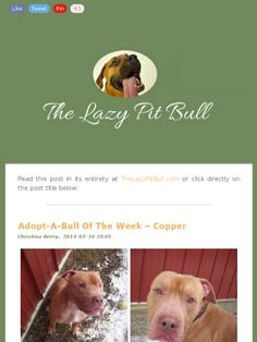 Adopt-A-Bull Of The Week – Copper