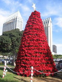 christmas trees in australia - Google Search...wowww, how did they get the star up there??