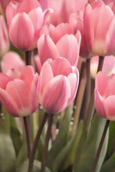 Pink tulips source: https://fineartamerica.com