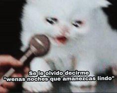 Mcr Memes, Stupid Memes, Funny Memes, Jokes, Cute Cat Memes, Cheesy Quotes, Kim Jisoo, Frases Tumblr, Love Phrases