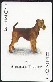 Airedale Terrier   playing card  Joker - indeed!