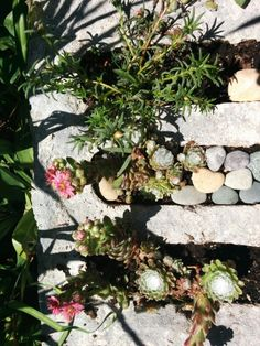 More cinder block gardening  pebblls  fill in space until succulents fill out