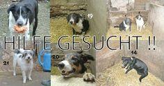 Tierschutz - schützt die Tiere dieser Welt – Google+ plz, these Dogs need our help  ♥  + share it +