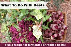 What to Do with Beets (plus a recipe for fermented shredded beets)   Blessed with an abundance of beets? Here are some great ideas for what ...