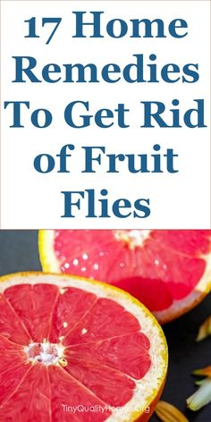 1301 Best Fruit Fly Removal images in 2019 | Fruit flies, Apple
