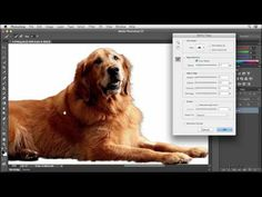 ▶ Photoshop CC tutorial: Selecting soft-edged objects using Refine Edge | lynda.com - YouTube