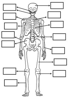 RECURSOS y ACTIVIDADES para EDUCACIÓN INFANTIL con los que todo maestro sueña. Juegos, fichas, recursos y actividades educación infantil. Science For Kids, Science And Nature, Human Skeleton Anatomy, Interactive Poster, Human Body Systems, Medical Anatomy, Force And Motion, Forensic Anthropology, Science Worksheets