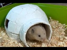 How to Make an Igloo House with Paper Mache Technique | DIY Hamster House - YouTube