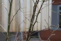 This is a photo of a building behind a shrub. I liked the way that it focust at the shrub and left the building a bit blurry.