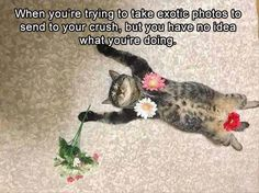 Enjoy These Hilarious Memes On Your Caturday