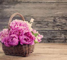 Şakayık  İnsanlar mutlu bir evlilik için şakayığın şans getirdiğine inanırlar.   Bu nedenle gelin buketlerinde sıkça yer almaktadır. Ayrıca utangaçlık ve sevgiyi temsil ettiği için, afrodizyak etkisinin bulunduğunu da belirtilmektedir.   #42maslak #luxury #meaning #flower #romantic #feeling