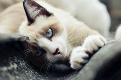 89cats:  byCarlos Fachini