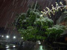 Photo Mania Greece: ´´ΤΗΕ MAGIC OF WINTER ´´.....ATHENS.....GREECE....... Athens Greece, My Photos, Greek, Magic, Winter, Plants, Winter Time, Greek Language, Plant