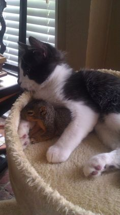 The squirrel sneaks in thru' the doggy door to hang out with it's BFF!